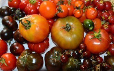 Tomato Tasting 2017