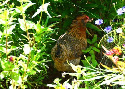 ben-chicken-7772