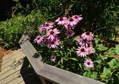 ben-flowers-7765