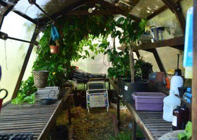 ben-greenhouse-7760
